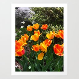 Flowers - Photography Art Print