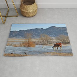 Cow drinking from a mountain stream from under ice in winter Rug