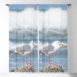 Tide Monitor Blackout Curtain