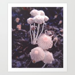 Fungus Blush Art Print