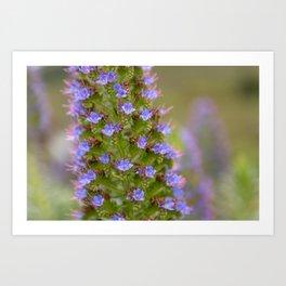 Californian Flora Art Print