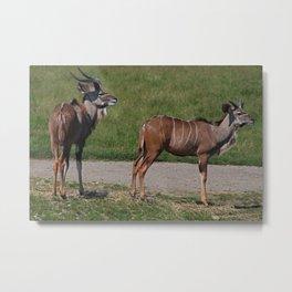 Wildebeest I Metal Print