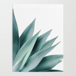 Agave flare II Poster