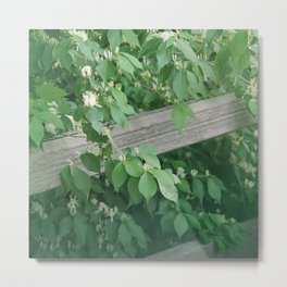 Black Locust Metal Print