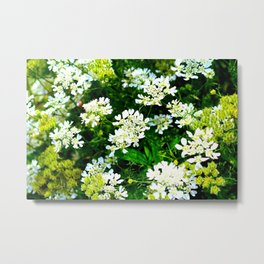 Lots of white little flowers Metal Print