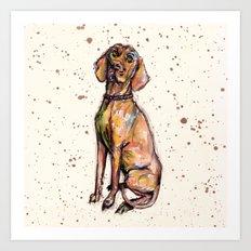 Hungarian Vizsla Dog Art Print