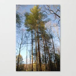 Dance With Nature Canvas Print