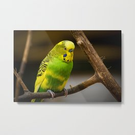 Feathered 20 Metal Print
