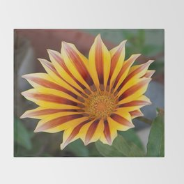 Single Flower Close Up Gazania Red Stripe Throw Blanket