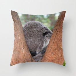 12,000pixel - 500dpi, High Quality Photograph - Sleeping koala Bear II Throw Pillow