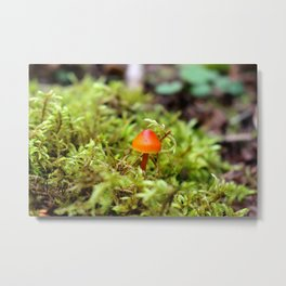 Small Yet Mighty Metal Print