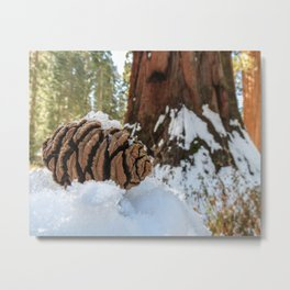 Sequoia Cone in Snow Metal Print