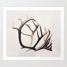 fig. 03 | antlers Art Print
