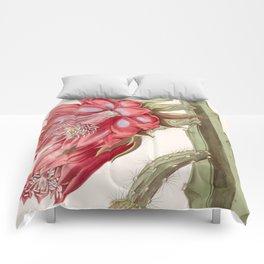 Disocactus speciosus/Cereus speciosissimus Comforters