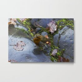 Robin Red Breast Metal Print