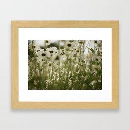 white daisies :) Framed Art Print