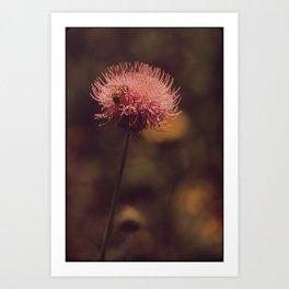 flower, honey Art Print
