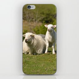 Lambing Season iPhone Skin