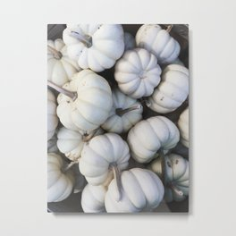 White Mini Pumpkins Metal Print