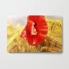 Poppy in the grain field II Metal Print