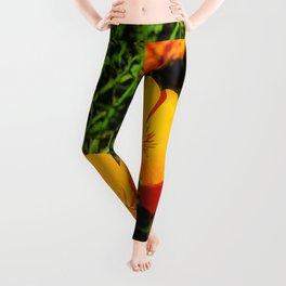 Golden Poppy Leggings