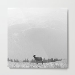 Ram, Black and White Metal Print