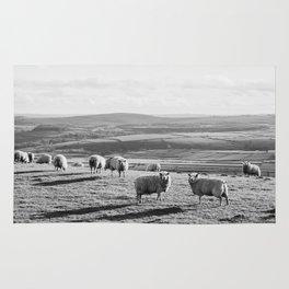 Sunlit sheep on a hilltop at sunset. Derbyshire, UK. Rug