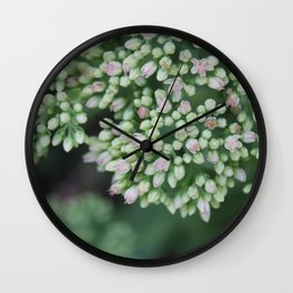 Pastel joy in bloom, flowering plant photography no.4 Wall Clock