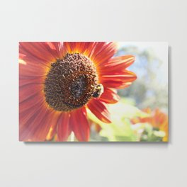 Bee and Sunflower Metal Print