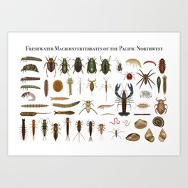 Freshwater Macroinvertebrates of the PNW Art Print