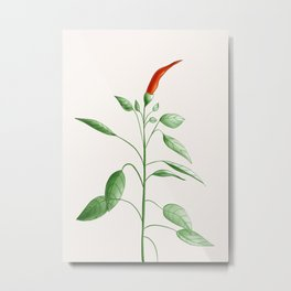 Little Hot Chili Pepper Plant Metal Print