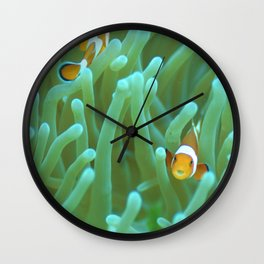 Clownfish (with a parasite that has replaced its tongue) Wall Clock