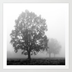 Trees on a Misty Morning Art Print