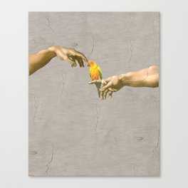 Scritching a sun conure Canvas Print