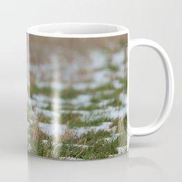 BIG WINGS Short Eared Owl Coffee Mug