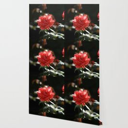 Sunny rose Wallpaper