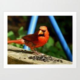 Cardinal morning! Art Print