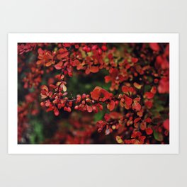 Red autumn berries Art Print