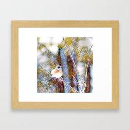 Junco Pastel Multi by CheyAnne Sexton Framed Art Print