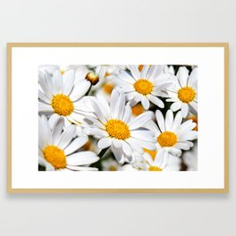 Daisy Flowers 0136 Framed Art Print