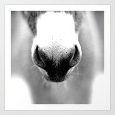 Donkey Nose Art Print