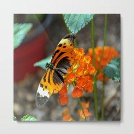 Numata Longwing Butterfly Metal Print