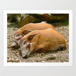 Red River Hogs taking a nap Art Print