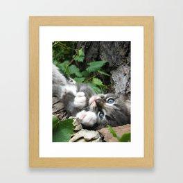 Kitten_01 Framed Art Print