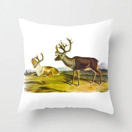 Caribou, or American Reindeer Throw Pillow