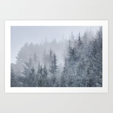 Early moorning... Into the woods Art Print