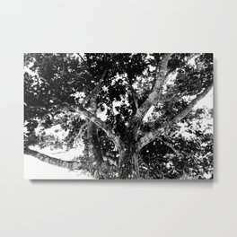 Mad tree Metal Print