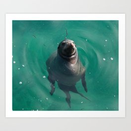 California Sea Lion Art Print