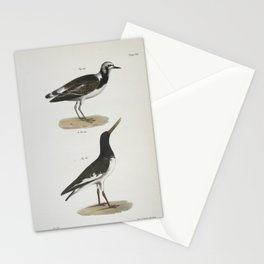 1346 182 The Turnstone (Strepsilas interpres) 183 The Mantled Oyster catcher (H_matopus palliatus)26 Stationery Cards
