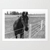 Horse - Black and White Art Print